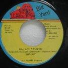 """SHAGGY jamaica 45 GALL YOU A PEPPER 7"""" Reggae BIG-YARD"""