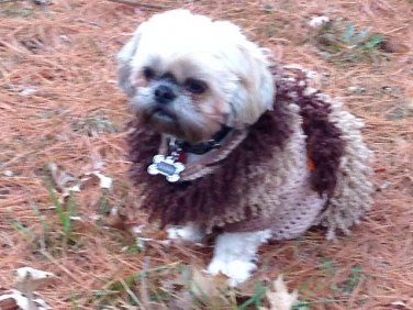 Tan dog Sweater with Far