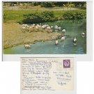 Yorkshire Postcard Flamengo Lake, Kirby Misperton, Malton Mauritron Item No. 50