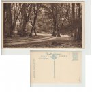 Hampshire   Postcard New Forest Mark Ash Enclosure. Mauritron #171