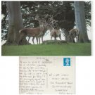 County Durham Postcard Red Deer Raby Castle. Mauritron #295