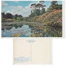Sussex Postcard Sheffield Park. Mauritron #308