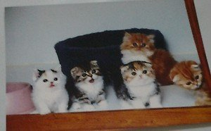 Cute Kittens kitty cats 4x6 photo card 3 Animals