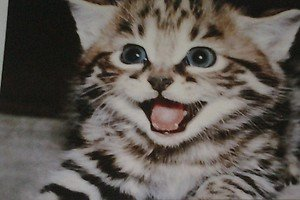 Cute Excited Kitten kitty cat 4x6 photo card Animals