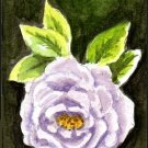 ACEO Lavender Rose by Patricia Ann Rizzo