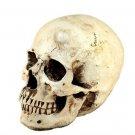 Skull model mannequin head room realistic