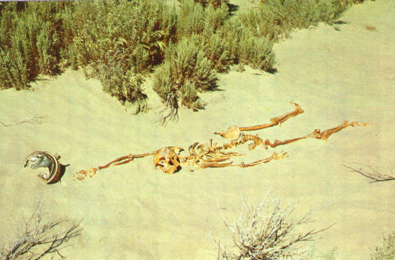 "Novelty- Nevada ""Desert Tragedy"" Skeleton Postcard"