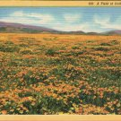 "Scenic- C.T. Art ""A Field of California Poppies"" Linen Postcard"