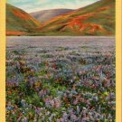 "Scenic- C.T. Art ""Wild Flowers (Lupine) Blooming in California"" Linen Postcard"
