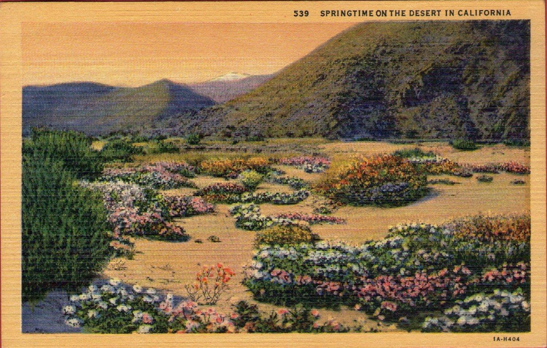 """Scenic- C.T. Art """"Springtime On The Desert In California"""" Linen Postcard"""