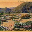 "Scenic- C.T. Art ""Springtime On The Desert In California"" Linen Postcard"