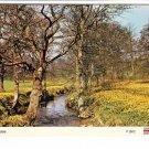 Daffodils in Farndale Postcard. Mauritron 214346
