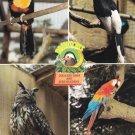 Paultons Country Park Romsey Hants Postcard. Mauritron 249839