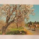 Postcard. Algarve Portugal  Mauritron #78249
