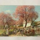 Postcard. Portugal Algarve Almond Trees Mauritron #78250