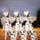 ANIMAL LOGIC - Animal Logic (1989) - Cassette Tape