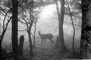 Deer on the Yellow Brick Road, Land of Oz, Beech Mountain, NC
