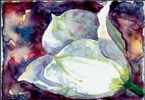 White Tulip- watercolor on Yupo