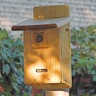Bird House for Bluebirds also perfect for Tree Swallows