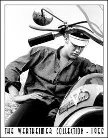 TIN SIGN Wertheimer - Elvis on Bike - 948