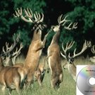 Deer Call Buck Grunt Calls Works On Primos E caller Mojo Double Trouble And More