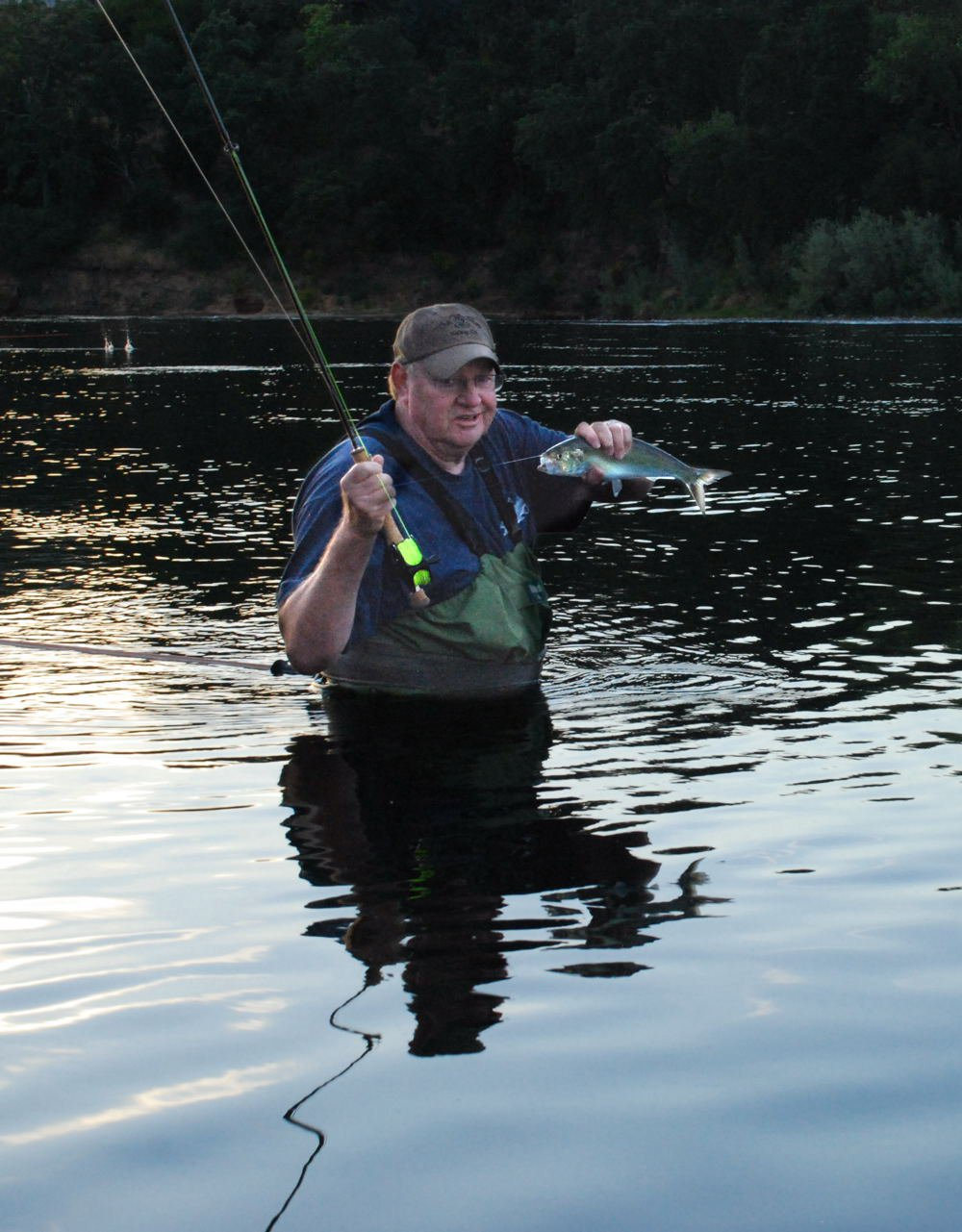 American river shad fly fishing tour for American river fishing