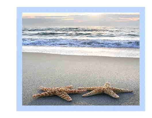 Starfish Duo Note Card