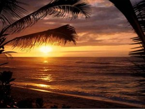 Palm Tree Sunset Note Card