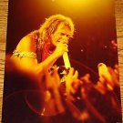 DAVID LEE ROTH Original Concert Photo  8 x 10   1980's