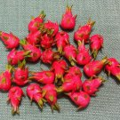20 Pitaya Dragon Fruit Asia Fruits Green Pink Tiny Food Clay Fimo Miniature Dollhouse Jewelry Beads