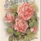 Scotts Roses Ice Box Magnet #M575