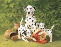 Dalmations Dog Firemen Tin Sign #935