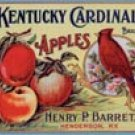Kentucky Cardinal Apples Tin Sign #648