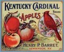 Kentucky Cardinal Apples Tin Sign #648