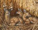 Deer Hunting Tin Sign #1039