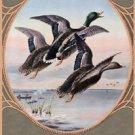 Winchester Three Mallard Ducks Tin Sign #937