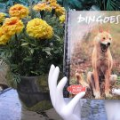 NATURAL KILLERS - PREDATORS CLOSE-UP Series: DINGOES: FRIEND OR FOE? DVD VIDEO and BOOK!