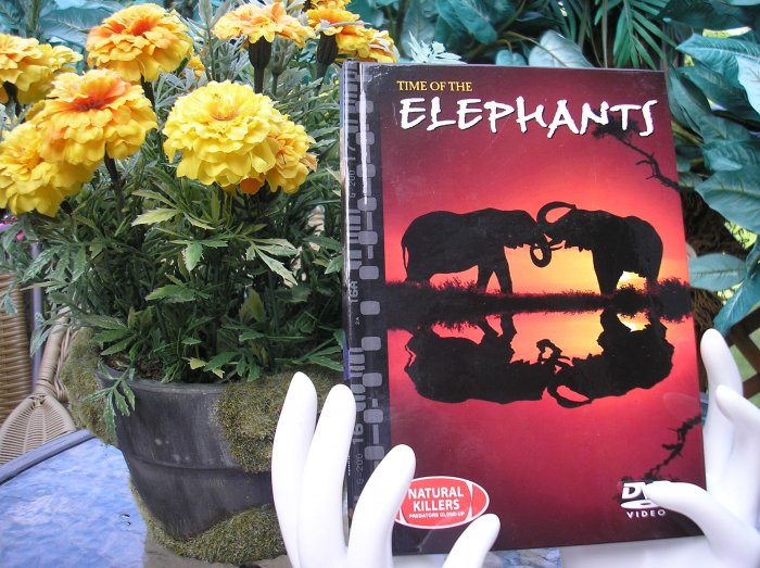 NATURAL KILLERS - PREDATORS CLOSE-UP Series: TIME OF THE ELEPHANTS DVD VIDEO and BOOK!