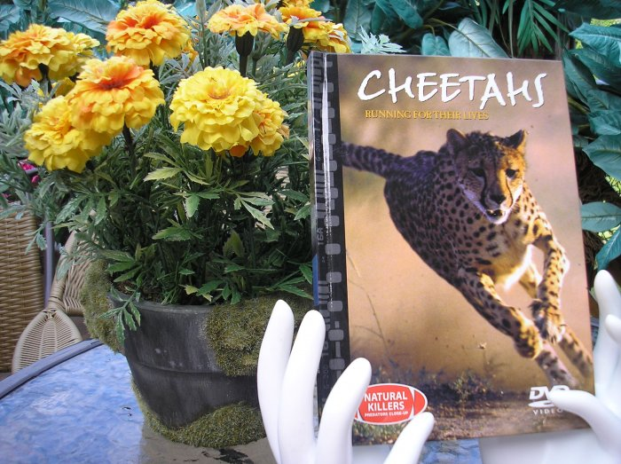 NATURAL KILLERS - PREDATORS CLOSE-UP Series: CHEETAHS: RUNNING FOR THEIR LIVES DVD VIDEO and BOOK!