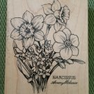 Narcissus/Amaryllidaceae Botanical Daffodil Flower Rubber Stamp #K-1282 by PSX- 1994- RETIRED- NEW!