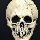 Nightowl Skull White Bone Skeleton Head Don Post Inspired Scary Halloween Collectors Mask