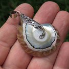Sterling Silver and Nautilus Shell Pendant SP-877