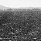 New 5x7 Civil War Photo: Peach Orchard on the Gettysburg Battlefield