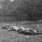 New 5x7 Civil War Photo: Rose Woods Casualties after the Battle of Gettysburg