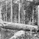 New 5x7 Civil War Photo: Evidence of Heavy Fire on Culp's Hill, Gettysburg