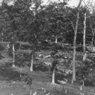 New 5x7 Civil War Photo: Battered Trees on Culp's Hill after Gettysburg Battle