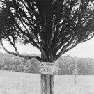 New 5x7 Civil War Photo: Where Stonewall Jackson Was Hit at Bull Run, Manassas