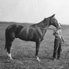 New 5x7 Civil War Photo: Baldy, Horse of Union General George Meade