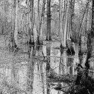 New 5x7 Civil War Photo: View of White Oak Swamp Battlefield, 1862