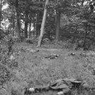 New 5x7 Civil War Photo: Dead on Battlefield of First Bull Run - Manassas